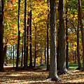 Tree's In The Forest by John Scatcherd