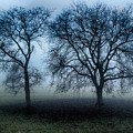 Trees In The Mist by Brothers Beerens