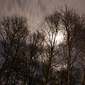 Trees In The Nigh by Gillian Lovett