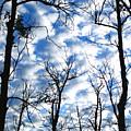 Trees In The Sky by Shari Jardina