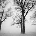 Trees In Winter  by Mioara Andritoiu