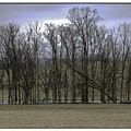 Trees In Winter by R Thomas Berner