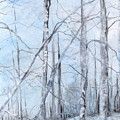 Trees In Winter Snow by Robin Miller-Bookhout