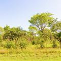 Trees In Zambia by Marek Poplawski