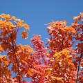 Trees Landscape Art Print Fall Tree Leaves Baslee Troutman by Baslee Troutman