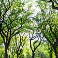 Trees Of Central Park, Nyc by Bob Cuthbert
