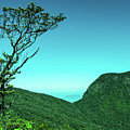 Trees Of Life by Sithila Waduge