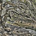 Trees Of Ziarat by Syed Muhammad Munir ul Haq