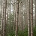 Trees On A Foggy Autumn Day 2 by Nancy De Flon