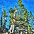 Trees On The Edge 2 by John Trommer
