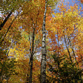 Trees On The Lincoln Woods Trail by Nancy De Flon