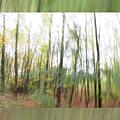 Trees On The Move by Don Zawadiwsky
