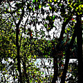 Trees Over Looking Water by Lori Faircloth