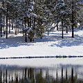 Trees Reflecting In Duck Pond In Colorado Snow by Steve Krull