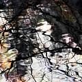 Trees Reflection Color by Yulia Kazansky