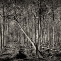 Trees by Roberto Pagani