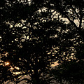 Trees - San Salvador II by Totto Ponce