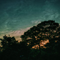 Trees - San Salvador Iv by Totto Ponce