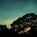 Trees - San Salvador V by Totto Ponce