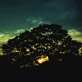 Trees - San Salvador Viii by Totto Ponce