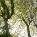 Trees by Vladi Alon