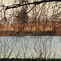 Trees With A Reflection by Gillian Lovett
