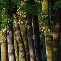Trees by Yu Wen Rao
