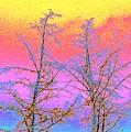 Treetops 1 by Will Borden