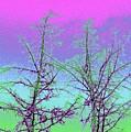 Treetops 5 by Will Borden