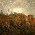 Treetops by Jessica Jenney