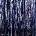 Treez Blue by Lon Dittrick