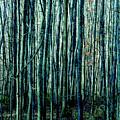 Treez Cyan by Lon Dittrick
