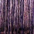 Treez Magenta by Lon Dittrick