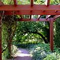 Trellised Walkway  by Deborah  Crew-Johnson
