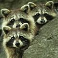 Tres Banditos by Mircea Costina Photography