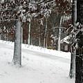Tress Of Snow by Lynn Reid