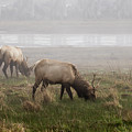 Trestle Bay And Bull Elk by Robert Potts