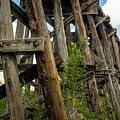 Trestle Timber by Imagery by Charly