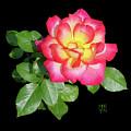 Tri-color Pink Rose2 Cutout by Shirley Heyn
