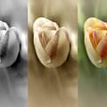 Tri Color Trio by Debbie Nobile