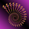 Tribal Seahorse Spiral Shell by Heather Schaefer