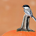 Trick Or Tweet. by Kelly Nelson