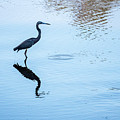 Tricolored Heron Silhouette by David Ramage