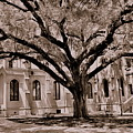 Trinity Episcopal Cathedral Court Yard by Lisa Wooten