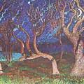 Trinity Tree By Moonlight by Stefan Duncan