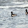 Trio Of Ducks by Linda Kerkau