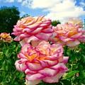 Trio Of Rose by Bennett Thompson
