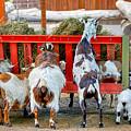 Trip Of Goats At Feeding Time by Charles Muziani