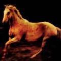 Triple Horse by Nick Sokoloff