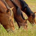 Triple Mustang Treat by Waterdancer